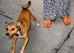 Láng giềng bất hòa vì... chó