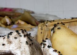 Thịt thối bị bắt giữ ngay cửa ngõ vào TP HCM