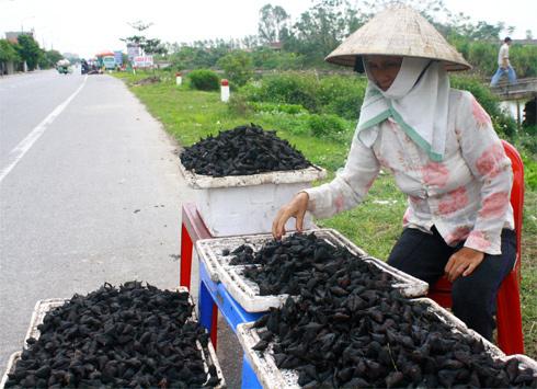 Giờ đang là mùa người dân Hải Dương, Thái Bình thu hoạch ấu, bán đầy hai bên đường. Ảnh: Phan Dương.