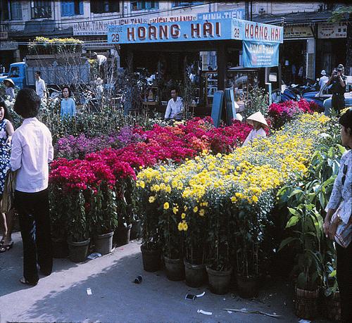 Nhiều loại hoa khoe sắc.