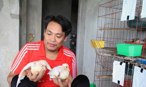 Người tù hoàn lương nuôi chim bồ câu