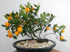 nhung-chau-hoa-no-dep-ca-thang-tet-8