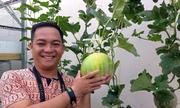 Ông bố Sài Gòn tặng vườn đủ rau ăn cho con gái nhỏ