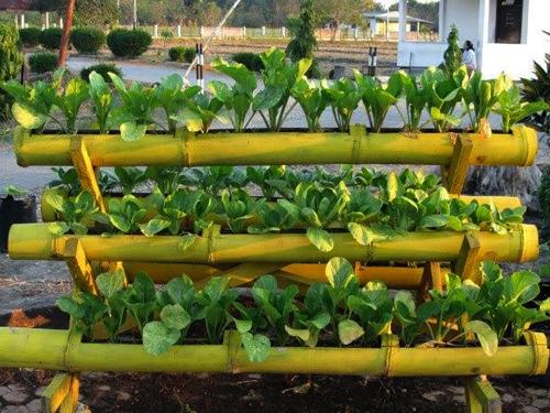 nhung-vuon-rau-xanh-ron-trong-trong-ong-tre-10