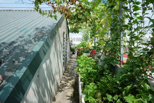 Cách đây vài năm, chị quyết định trồng một ít cây, chủ yếu để làm mát cho sân thượng.