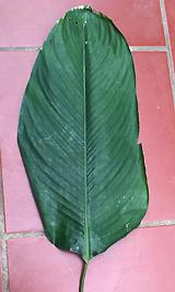 chua-chinh-xac-3