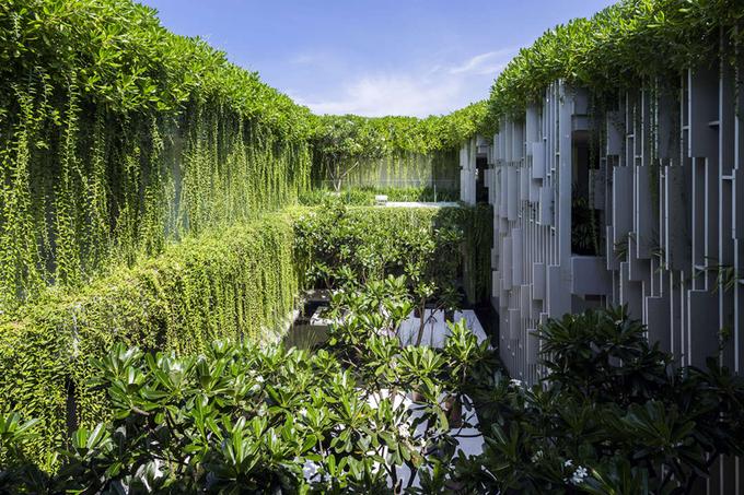 Báo Mỹ thích thú với mốt rèm cây phủ kín nhà Việt