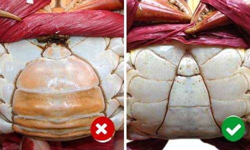Bạn có biết 6 mẹo để luôn mua được hải sản tươi ngon
