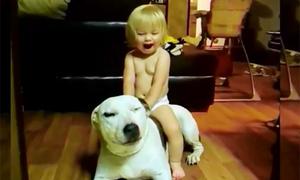 Những chú cún trông trẻ khéo đến khó tin