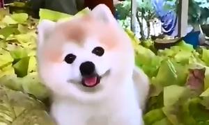 Những chú cún ai nhìn cũng mê tít