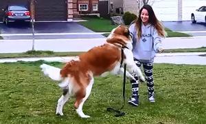 Những chú cún khổng lồ vẫn tưởng mình bé bỏng