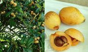 Nhiều trái cây ngoại siêu đắt tại Việt Nam có giá bình dân ở nước ngoài