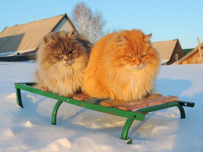 Gia chủ hạnh phúc dù nhà bị đàn mèo nghìn con xâm chiếm