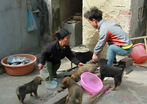 Nguyễn Thành Công đã bước sang tuổi 17, nhưng mới cao 90 cm. Gia tài quý nhất của nhà em hiện là đàn chó con. Ảnh: Phan Dương.