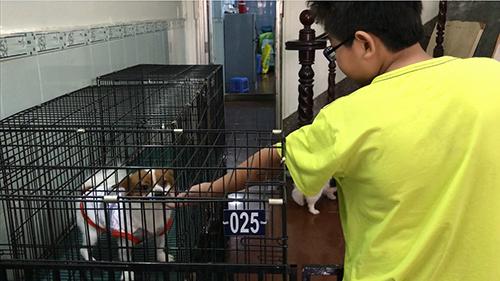 Cậu chủ nhỏ nhà ở Tân Bình tạm biệt bé cưng tên Sữa tại khách sạn chó mèo ở quận Tân Phú trước khi về quê - Ảnh: Hoàng Anh