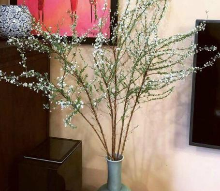 Hoa bền 15- 20 ngày. Nếu muốn hoa được tươi lâu nên thay nước cắt gốc 2 ngày một lần. Bạn có thể bỏ một viên B1 vào lọ cắm hoa để hoa chắc khỏe.