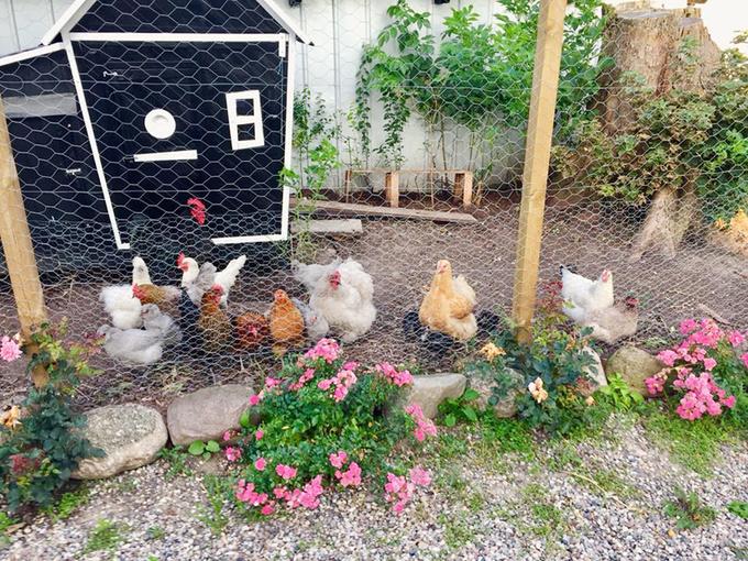 Chàng trai trồng rau, nuôi gà trong trang trại đẹp như tranh