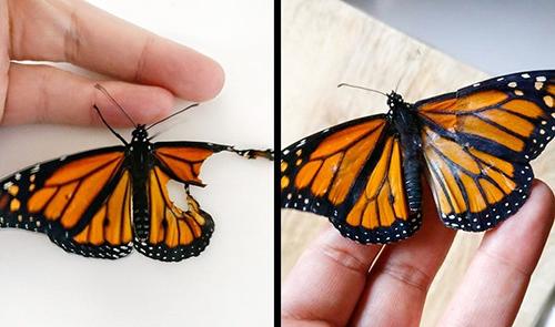 Trước khi qua đời cách đây 7 năm vì bệnh ung thư, mẹ của cô bé Romy đã nói với em: Mỗi khi con nhìn thấy một chú bướm, hãy nhớ rằng đó chính là mẹ tới thăm con. Romy quyết định sẽ cố hết sức để bảo vệ các loài bướm trên khắp thế giới. Có một lần, cô bé nhìn thấy một chú bướm bị gãy cánh. Romy đã tận dụng lại đôi cánh của một con đã chết, sử dụng nhíp, kéo nhỏ, keo dính để cứu cho chú bướm gặp nạn.