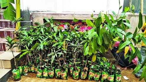1001 cây non được nhà gái gửi tới cho chú rể làm quà cưới theo ý muốn của anh. Ảnh: Telegraphindia.