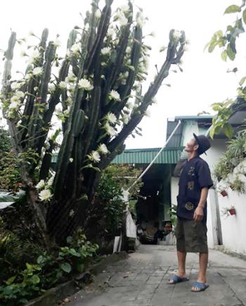 Bố chị Hằng đứng bên cạnh cây xương rồng cao khoảng 4m.