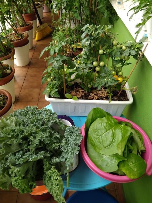 Trồng rau trong nhà và ban công, gia đình Việt ở Czech đủ ăn quanh năm