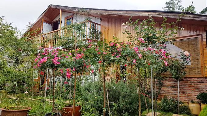 Gia đình Đà Lạt sống trong nhà gỗ giữa vườn hồng 1.000 m2