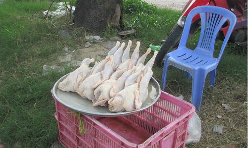 Một hàng gà mái đẻ bày bán ven đường Nguyễn Văn Linh, quận 7, TP HCM - Ảnh: HoàngAnh
