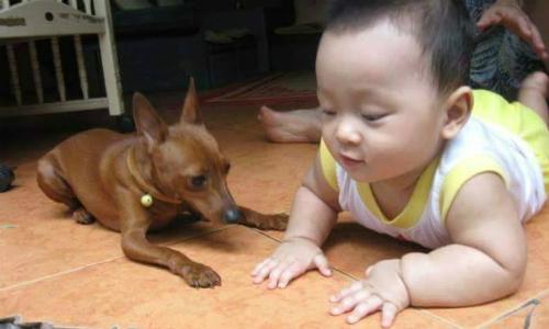 Bác sĩ Báu cho biết các gia đình có trẻ nhỏ chỉ nên nuôi những giống chó nhỏ và ít lông để đảm bảo an toàn về sức khỏe.Ảnh: NVCC.