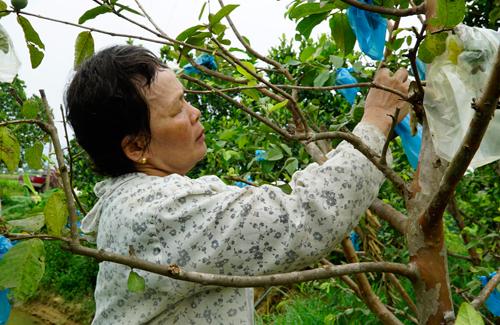 Đang phải chữa bệnh ung thư, bà Văn vẫn lao động và là chủ lực kinh tế của gia đình.