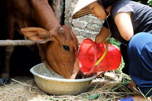 Chị Cậy sống cùng con trai và nuôi bò để có thu nhập.