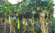 Khu vườn 'cái gì cũng có' của mẹ Việt ở Đức