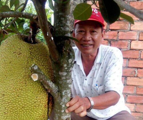 Hiện trong vườn ông Sơn có hơn 200 cây mít Thanh Sơn đang trong thời kỳ cho trái. Ảnh: NVCC