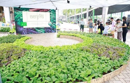 Các gia đình có thêm kiến thức, kinh nghiệm để tự thực hiện vườn rau tại nhà khi tham quan mô hình, nghe chia sẻ cách trồng rau hữu cơ.