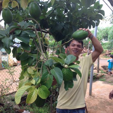 Anh Trung bên cây bơ khổng lồ - Ảnh: Nhân vật cung cấp