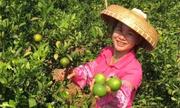 Chị nông dân bỗng thành sao trên mạng nhờ các video ở vùng quê