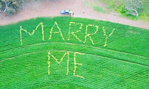 Dòng chữ được cắt trên cánh đồng lúa mỳ của anh nông dân. Ảnh: watoday.
