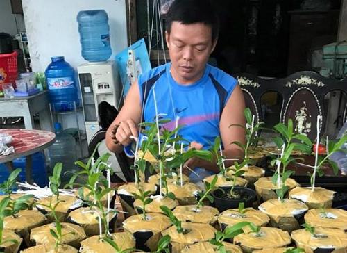 Hiện anh Tuyên đang tiếp tục nhân giống để bán ra thị trường. Ảnh: NVCC.