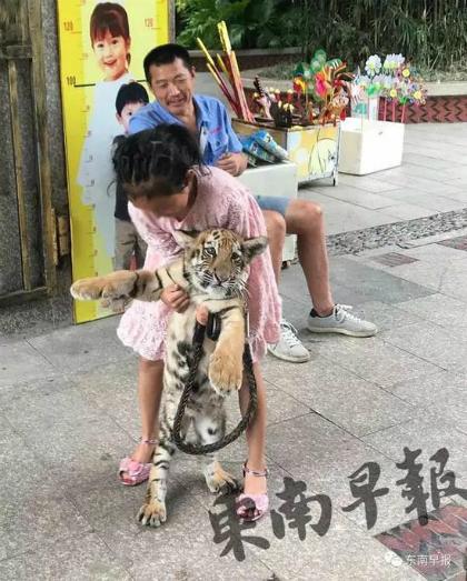 Ông bố cho con chơi với hổ. Ảnh: Sina.