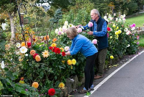 Hiện tại hai bên đã đi đến thoả thuận, sẽ dọn những thùng ủ phân hai bên đường, còn các luống hoa vẫn giữ lại. Vợ chồng ông Brian bắt đầu trồng luống hoa quanh đây được 5 năm, chi phí bỏ ra khoảng 1.000 bảng Anh.