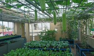 Gia đình thành phố về ngoại ô trồng rau sạch