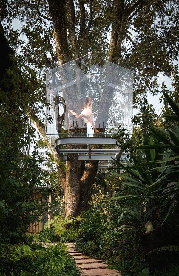 Ngôi nhà trong suốt lơ lửng trên cây