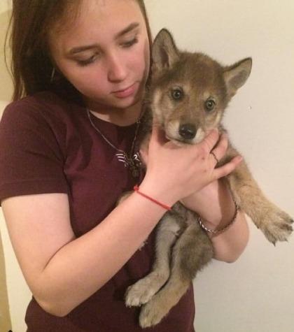 Con gái của Ivan và chú sói con Gray khi nó còn bé. Ảnh: Vpravda.