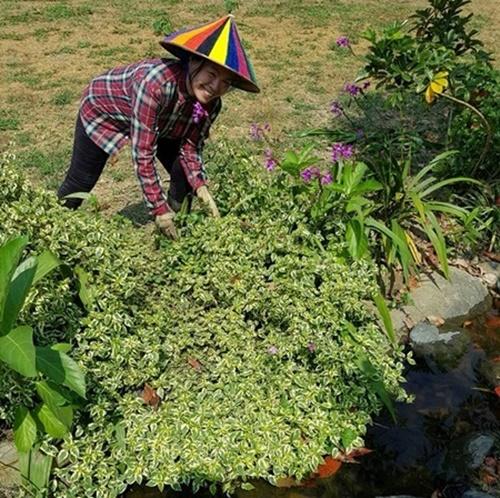 Tự tay cô cắt tỉa cỏ, trồng hay hay chọn từng viên đá để có tiểu cảnh ưng ý.