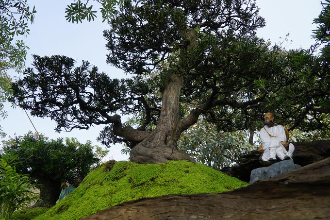 3 chậu 'cây trong cây' khổng lồ phải đi container ra Hà Nội