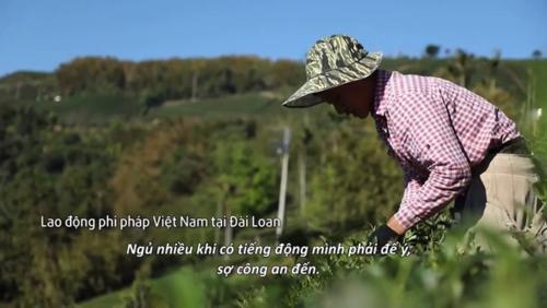 Hình ảnh người lao động bất hợppháp Việt Nam tại Đài Loan trong phim tư liệu của VTV. Ảnh: VTV