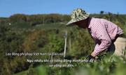 Cuộc sống chực chờ bị bắt của những người Việt làm chui tại Đài Loan