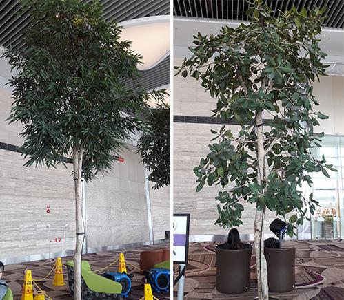 Cây xanh trồng trong nhàở Singapore đã được xử lý chống muỗi. Ảnh: Đoàn Thanh Hà.