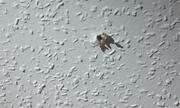 Người đàn ông 4 tuần sống trên trần nhà bạn gái cũ để theo dõi