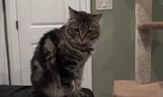 Ông bố chi 1.500 đôla/tháng để thuê căn hộ cho mèo ở