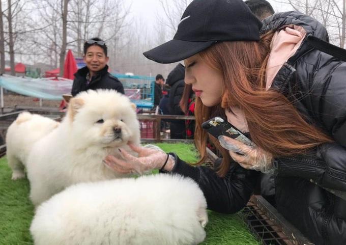Cô gái phát tài chỉ sau 4 tháng bỏ văn phòng làm nghề bán chó